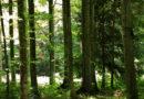 Grande novità dell'estate di Tarvisio: arriva il Forest Bathing