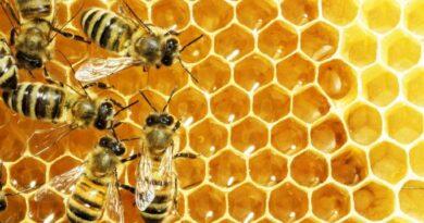20 maggio 2021 – Giornata mondiale delle api    Proteggere le api per salvare la biodiversità.           Come i laboratori pH di TÜV Italia aiutano nella tutela
