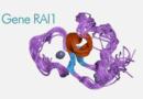 """Il Progetto di Ricerca multidisciplinare sul """"Gene Rai1"""""""