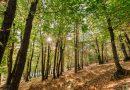 Autunno di benessere in Tenuta de l'Annunziata Un'immersione nella natura per rigenerare corpo e mente