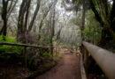 Immergersi nelle foreste preistoriche delle Canarie